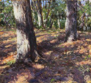 Matthew Cutter - Forest Shadows