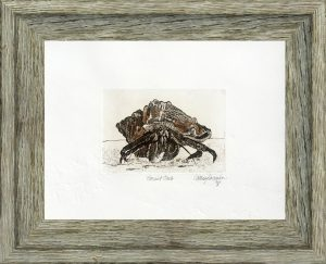 Cathey December - Hermit Crab