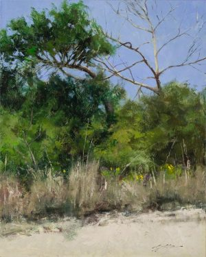 Matthew Cutter - Trees at Matanzas Inlet
