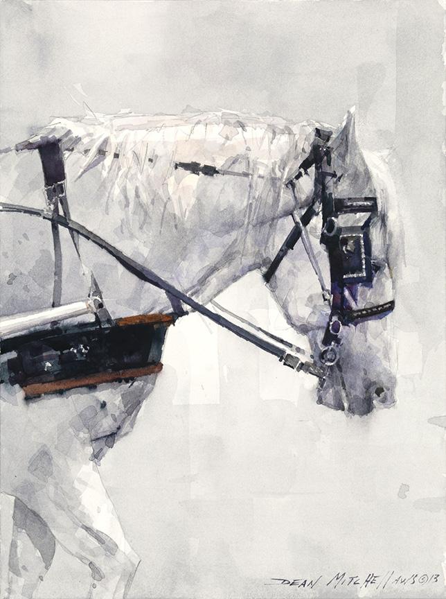 Dean Mitchell - White Carriage Horse